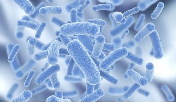 益生菌2.jpg